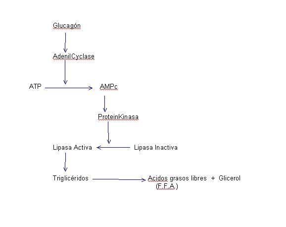 read Биология и биотехнология аэробных метилотрофов: учебное пособие